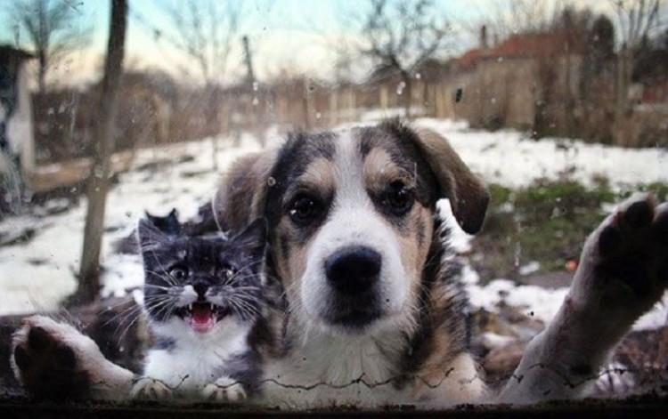 Zwierzęta, które pod byle pretekstem  chcą dostać się do domu.