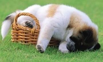 Zmorzone snem szczeniaki.