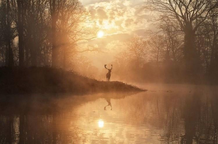 Łoś w promieniach zachodzącego słońca (Max Ellis).