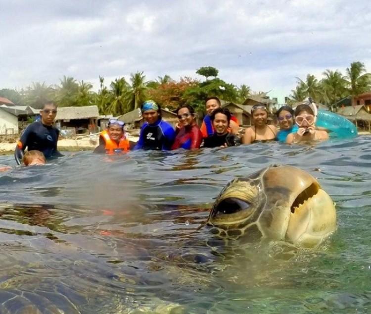Żółw pozuje turystom.