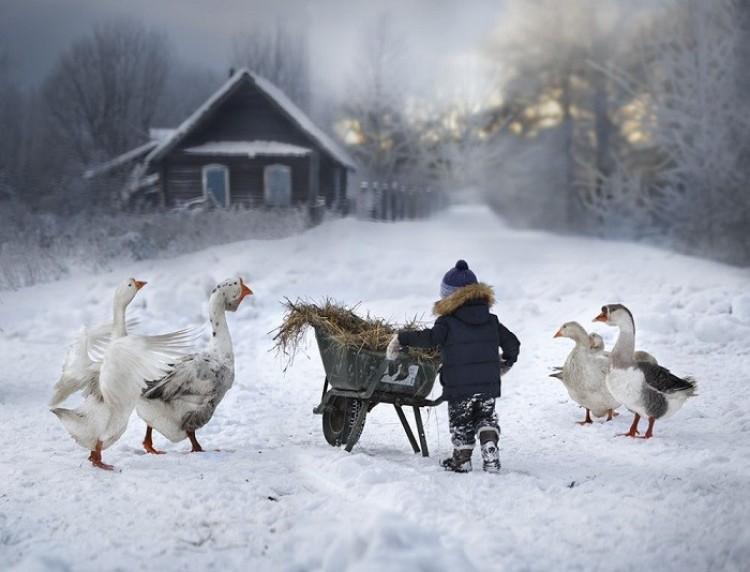 Zbliża się zima (Elena Shumilova).