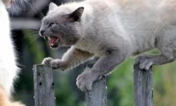 Bezdomny kot. Jaki on jest?