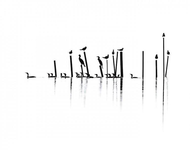Mewy, kormoran rogaty i rybitwy