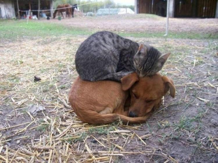 Nowy poziom związku kota i psa.