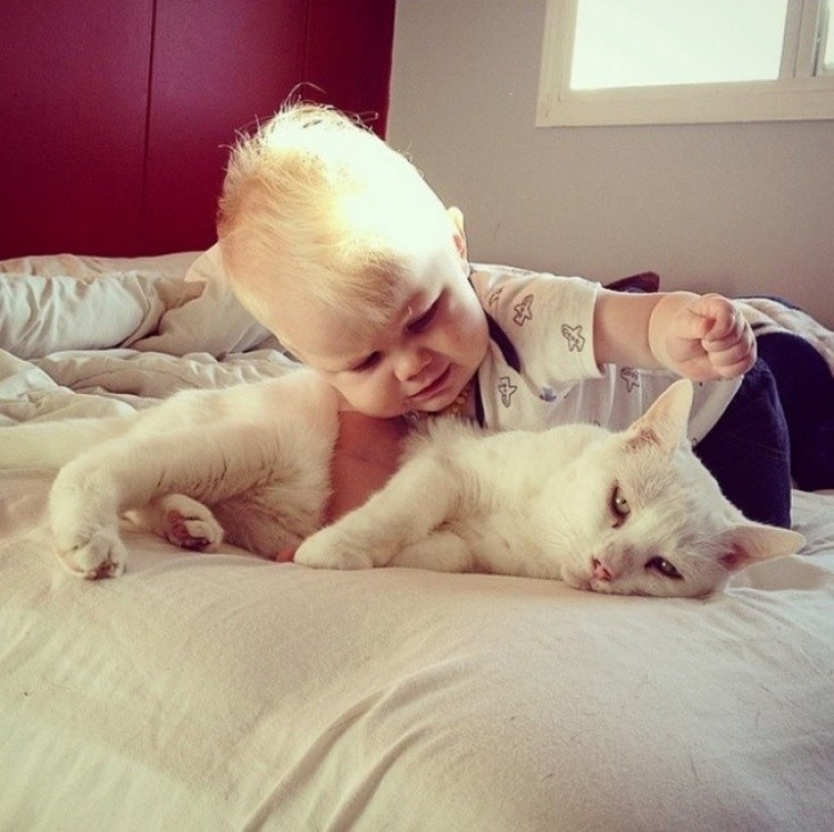 Najbardziej cierpliwy kot na świecie.