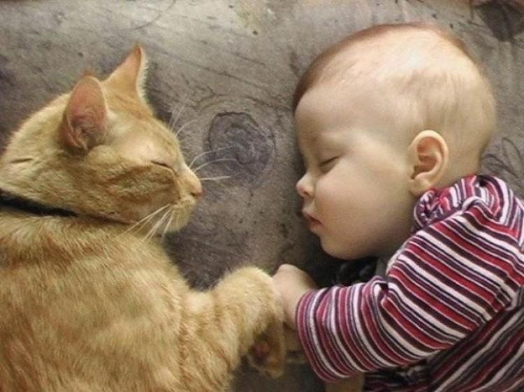 Strażnik snu.