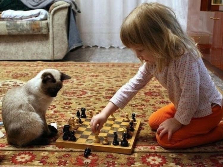 Idealny partner do gry w szachy.