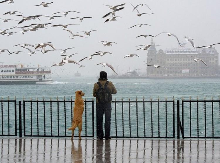 Udowadniamy, że nie ma nikogo bardziej oddanego niż pies.
