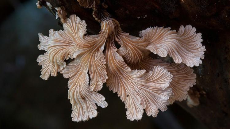 Nie wiedziałem, że istnieją takie grzyby.