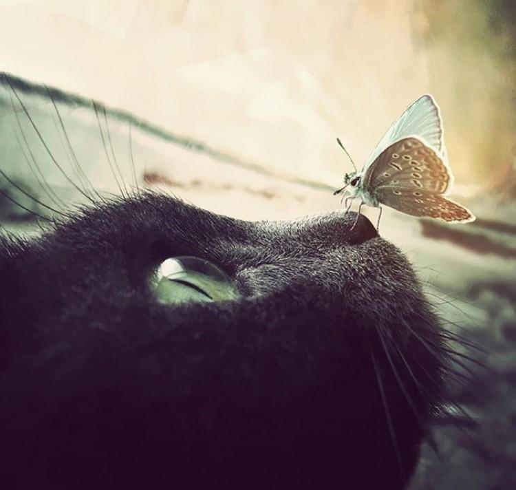 Motylek odpoczywa na ciepłym nosie kota.