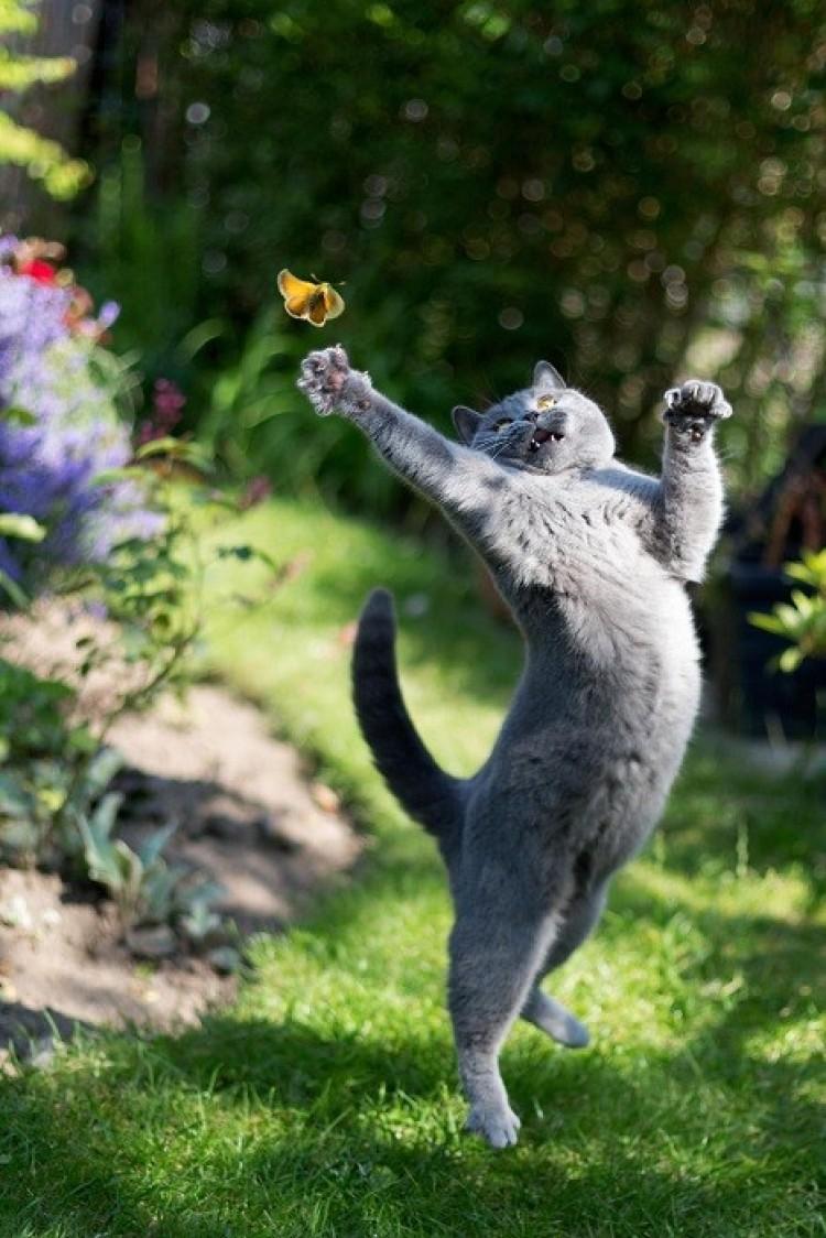 Ciekawa rozrywki dla kota.