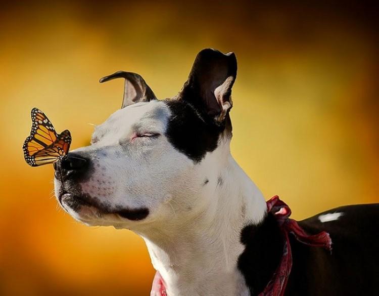 Pies cieszy się pocałunkiem motyla.