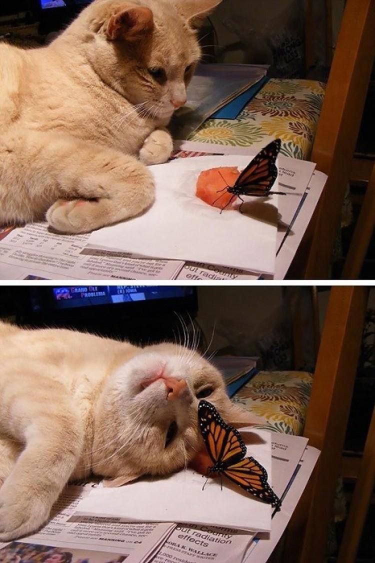 Reakcja kota na motyla.