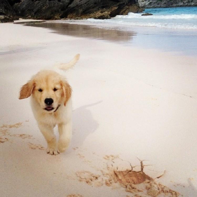 Uwielbiam spacerować po pustej plaży ...