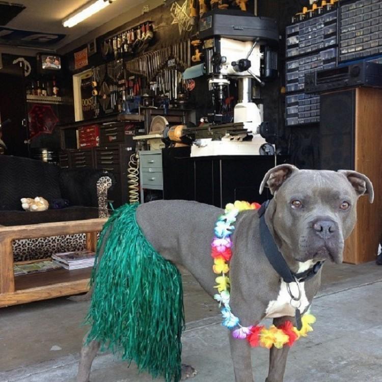 Hawajskie party - to coś!