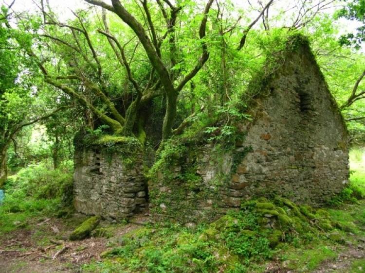 Ścieżka między Sneem i Kenmare w Irlandii