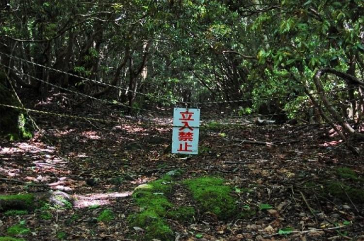 Las Aokigahara, Japonia