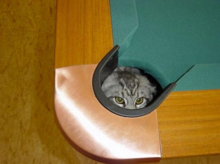 Miejsca, w których na pewno nie będziesz szukał swojego kota.