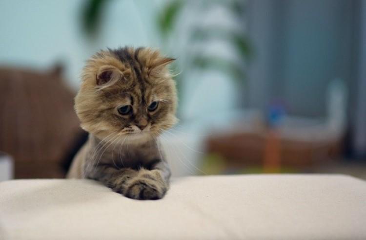 Najcenniejsze i najśmieszniejsze zdjęcia kotów.