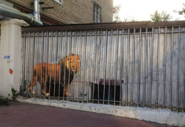 Ogromny lew w klatce