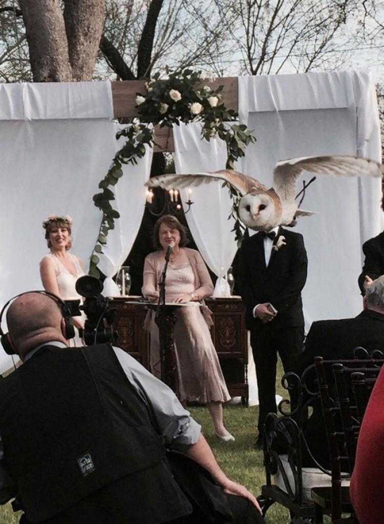Ślub sowy.