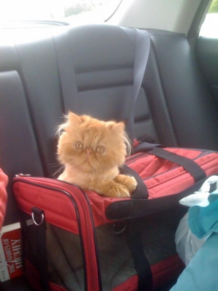 W podróży do nowego domu.