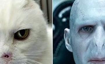 Lord Voldemort.
