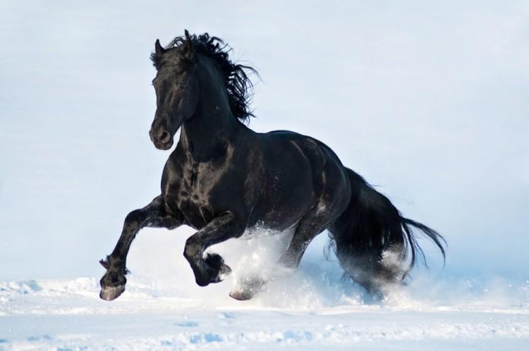Dla tych, kto uważa, że konie to najpiękniejsze zwierzęta na świecie.