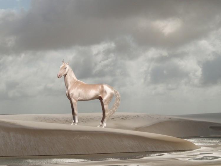 Konie achał-teke.