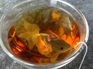 Herbaciana złota rybka.