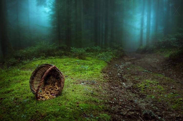 Mistyczne lasy, w których aż chce się zabłądzić...