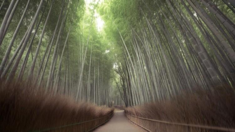 Park Arashiyama, Japonia
