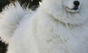 Zwierzęta, którym zimowe mrozy nie straszne.