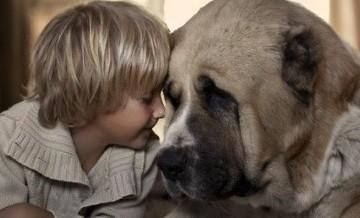 Maluchy i ich duże psy.