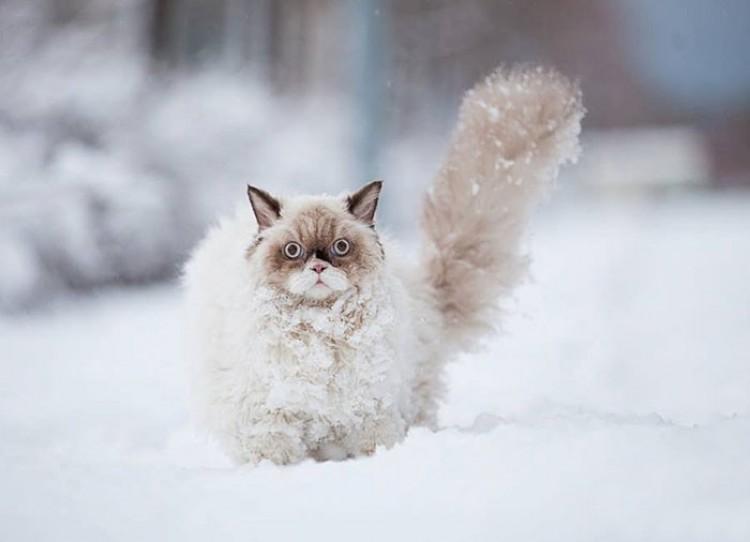 Perski kot odkrył istnienie śniegu. Jakie zdziwko!