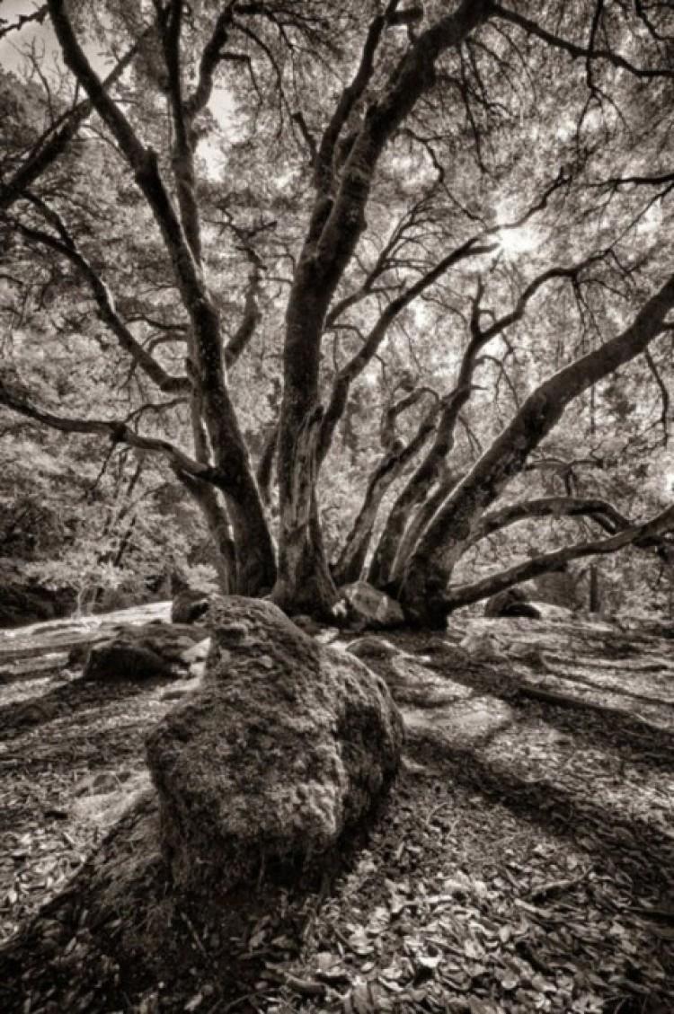 Cień drzewa.