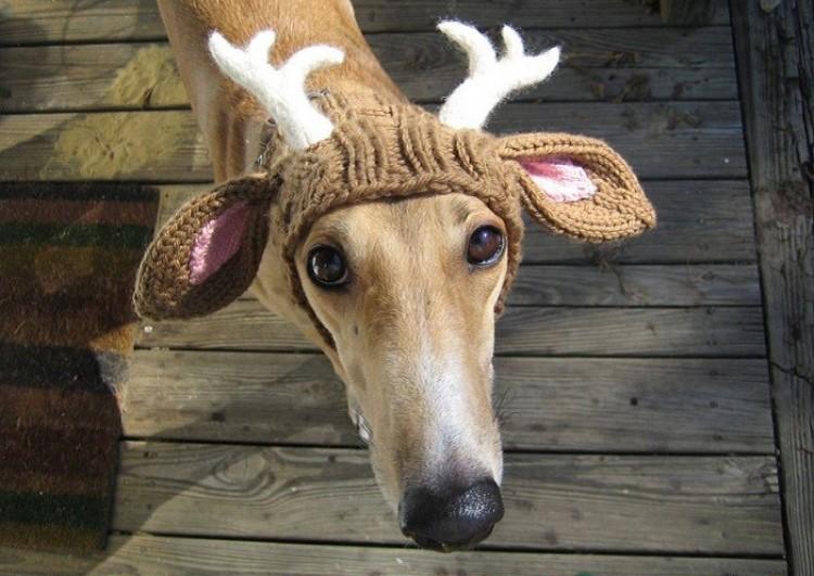 Wiązane różki to dobre świąteczne przebranie dla psa.