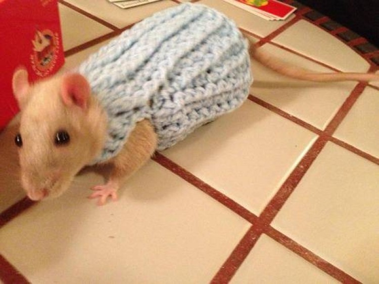 8.) Szczurom też bywa zimno, żebyś wiedział.
