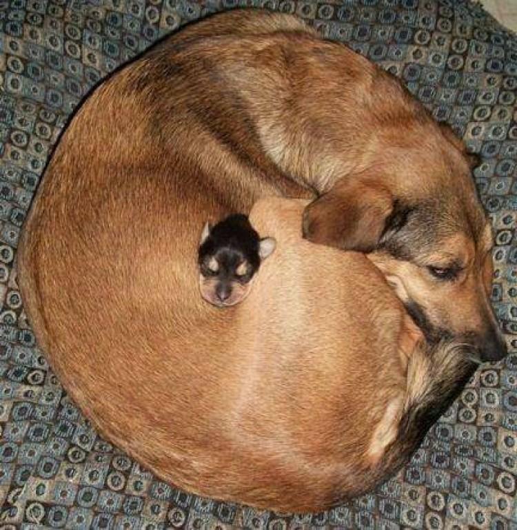 Mama to najcieplejsze i najmilsze miejsce na ziemi.