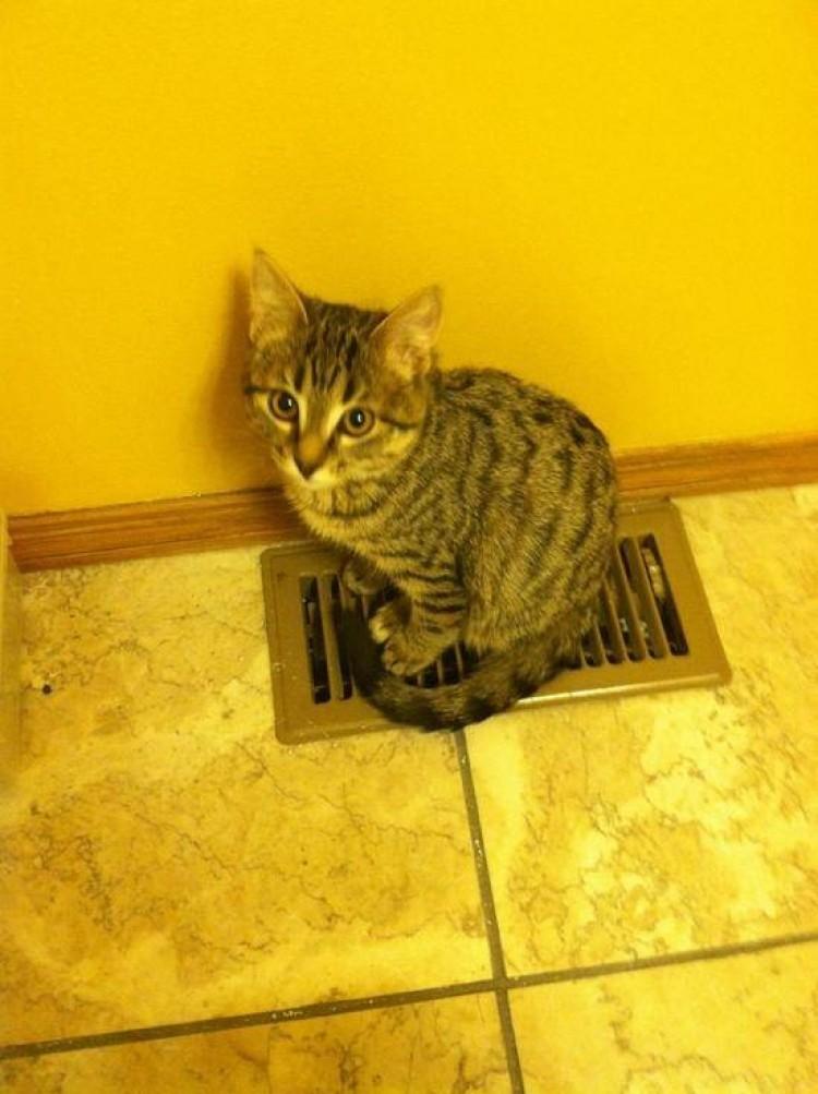 Dunno dlaczego podłoga właśnie tutaj jest taka ciepła?