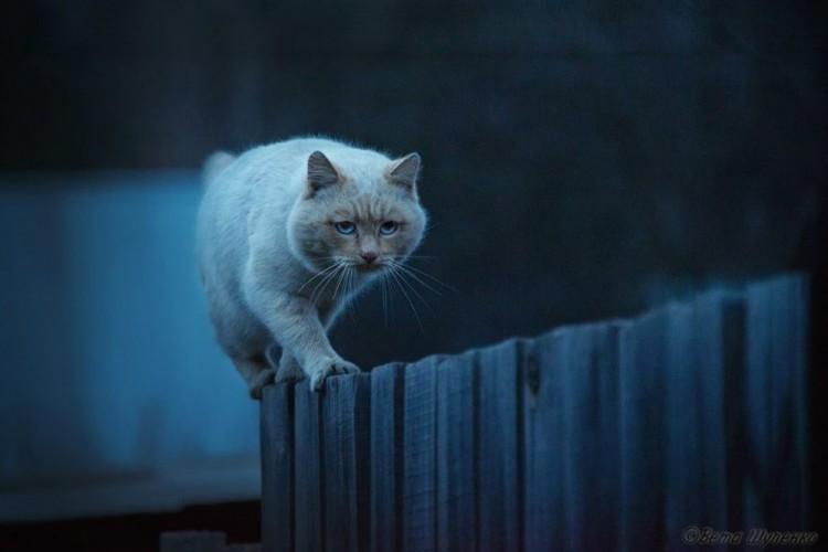 Straż nocna. Rosja