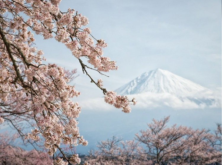 Fuji i Sakura, Japonia