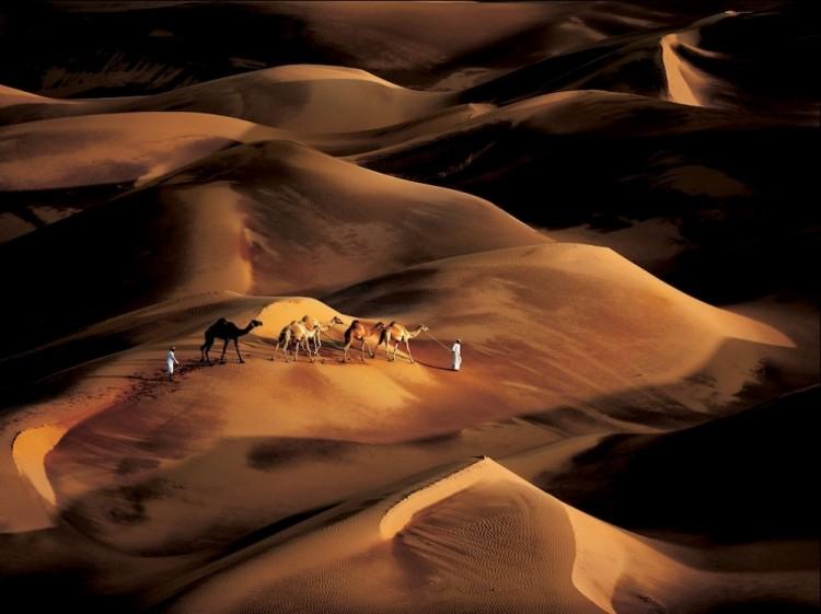 Kierowcy wielbłądów. Emirate of Abu Dhabi