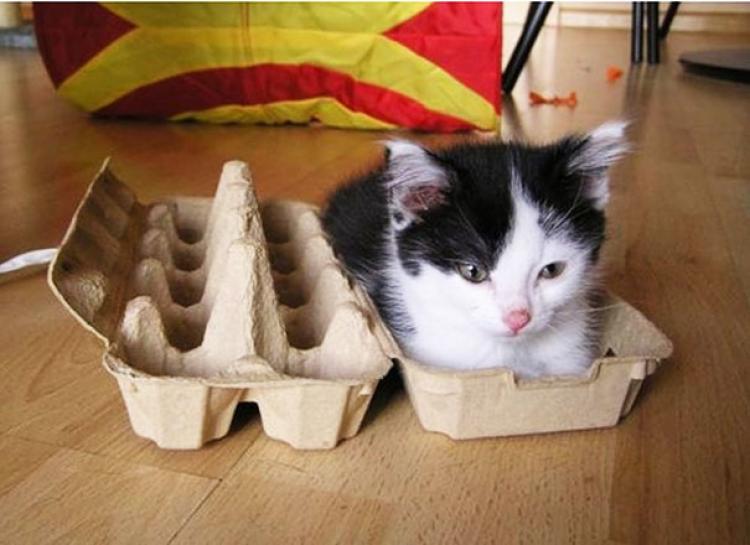 Kot na śniadanie?