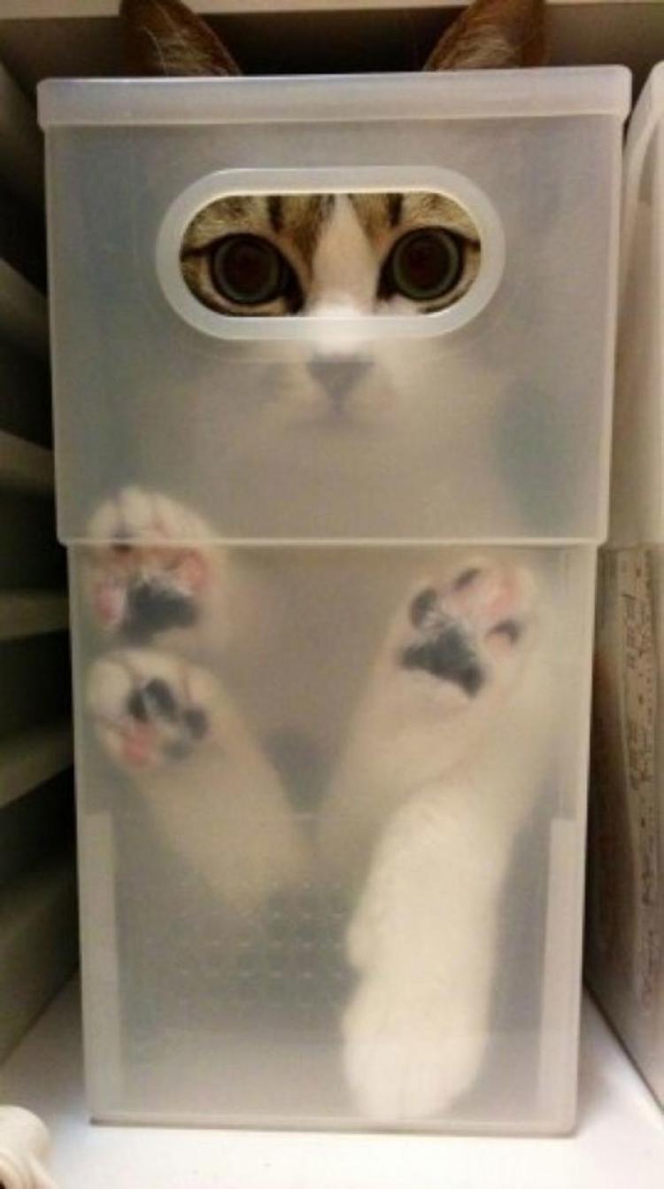 Wypuść mnie stąd!