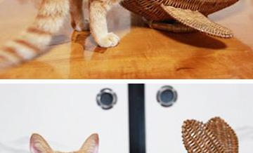 Kot w butach czy... pudełku?