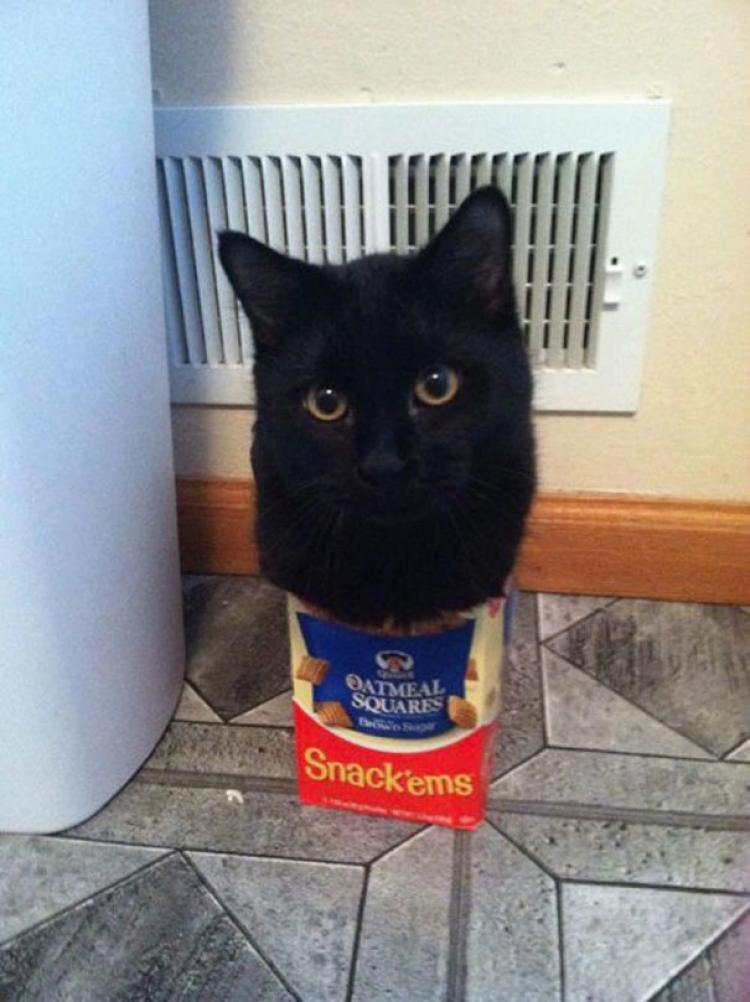 Założę się, że zjadł całą przekąskę.
