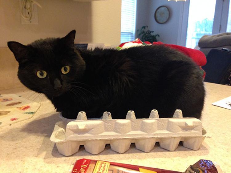 Czy koty znoszą jaja? Ponieważ ten byłby perrrrfekcyjną kurą.